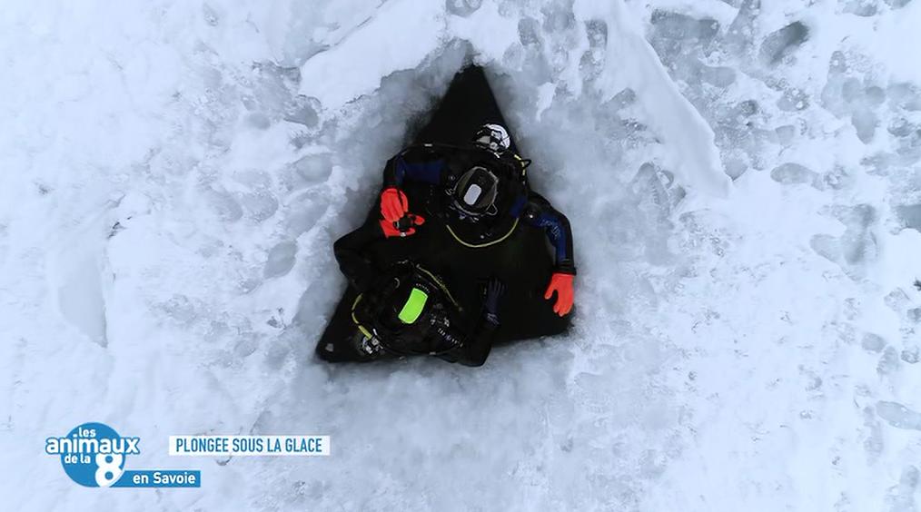 les animaux de la 8 - plongée sous glace val cenis