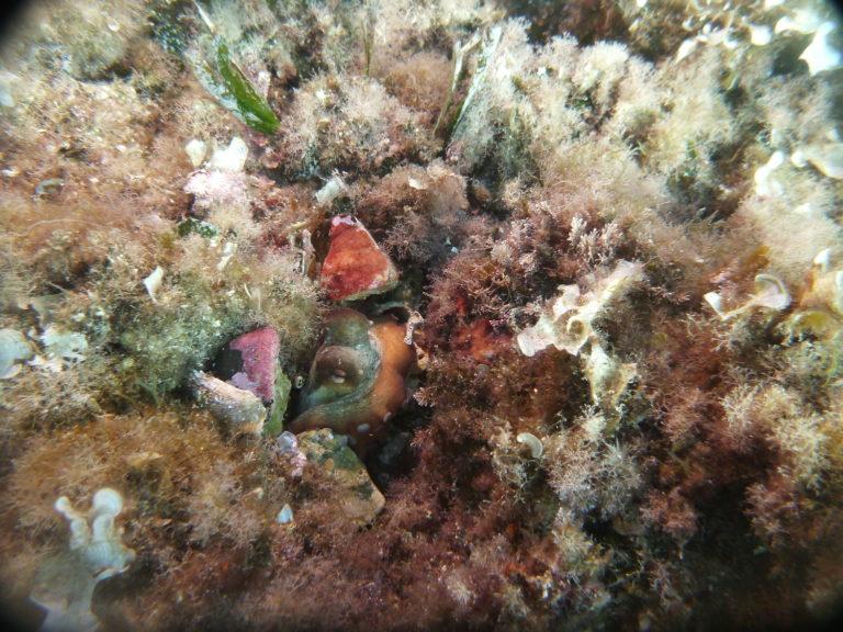 Formation en plongee sous marine en savoie